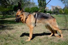 #Leather #German #Shepherd #Dog #Harness for Safe Walking $59.00   www.all-about-german-shepherd-dog-breed.com