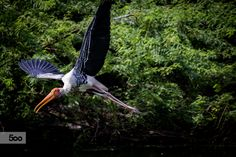 In search for nest by Meraki Photography on 500px