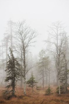 Autumn forest (Southern Lapland, Finland) by Tiina Törmänen nw. Beautiful World, Beautiful Places, Beautiful Pictures, Winter Forest, Foggy Forest, Misty Forest, Landscape Photography, Nature Photography, Travel Photography