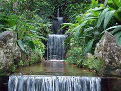 Botanical Garden, Río de Janeiro, Brasil.