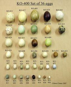 """""""Miguel coleccionaba también huevos de pájaros del país. Los había verdaderamente bonitos: marrones, grises, azulados, verdosos, rosados,..."""
