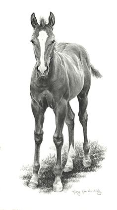 In his competition clothes charcoal drawing, equine art, graphite, drawing ideas, animals Horse Pencil Drawing, Pencil Drawing Tutorials, Horse Drawings, Animal Drawings, Drawing Ideas, Cowboy Draw, Landscape Pencil Drawings, Baby Horses, Equine Art
