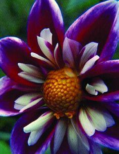Beautiful flower photography.