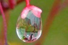 Bulles d'air ou de savon, gouttelettes d'eau apr�s une ros�e fra�chement install�e, ces �l�ments captur�s en macro offrent une vision surprenante, voire presque irr�elle de la nature.