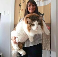 Now that's a cat. Wow!