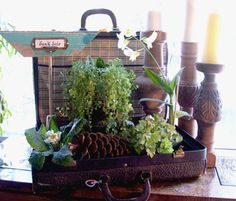 vintage suitcase used as a planter