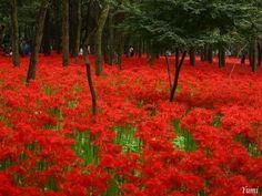 alfombra roja wallpaper
