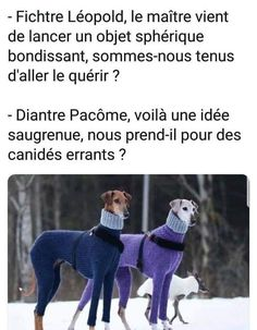 #VDR #HUMOUR #FUN Dankest Memes, Funny Memes, Hilarious, Jokes, Image Gag, French Meme, Funny True Quotes, Derp, Troll