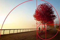 Image of fog on the sea wall, Vancouver, Canada with spiral overlay using the Golden Ratio of composition by Sarah Vercoe.
