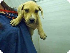 Help me get a home of my own ADOPT FROM A RESCUE don't buy while recuse dogs die