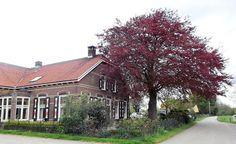 IJsselstein - Kaasboerderij  Klaphek