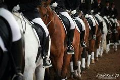 dressage riders all in a row