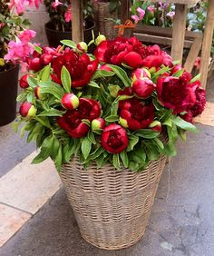 * Chic Provence * - Red Peonies