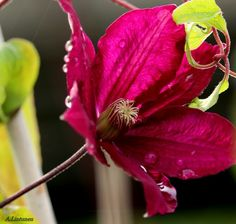 Garden - Puutarha