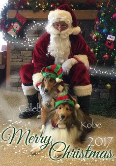 caleb-kobe-santa.jpg?utm_source=Sheltie+Nation+Subscribers&utm_campaign=072a71ad14-RSS_EMAIL_CAMPAIGN&utm_medium=email&utm_term=0_f235c5a63f-072a71ad14-87202577