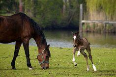 Pin By Terri McManus On Horses