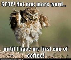 Not until my first cup of coffee