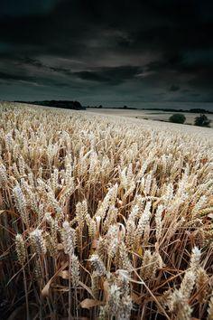 vividessentials:Harvest Whisper | vividessentials