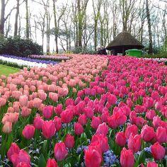 #Olanda #parcobotanico #natura#fiori #colori by fernanda4600