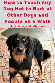 How to Teach Any Dog Not to Bark at Other Dogs and People on a Walk   Dog Training Tips   Dog Obedience Training   Dog Training Ideas   http://www.dogtrainingadvicetips.com/teach-dog-not-bark-dogs-people-walk