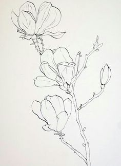 Flower sketches: Drawing Pink Magnolia flowers – Pen and Ink plus Watercolor Wash Plant Drawing, Painting & Drawing, Watercolor Paintings, Watercolour, Drawing Drawing, Watercolor Portraits, Watercolor Landscape, Abstract Paintings, Matisse Drawing