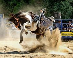 Spencerville Rodeo Ontario Local Events, Rodeo, Wonderful Places, Ontario, Horses, Travel, Animals, Viajes, Animales