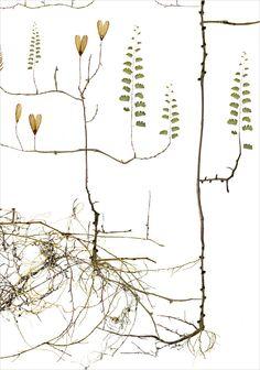 Moth Tree / Malträd - Lottas Träd/ Lottas Trees
