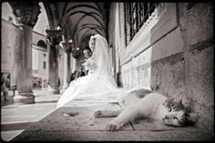 Wedding Photography by Sinisa Stambuk