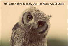 10 Facts You Probably Didn't Know About Owls (with video)  ... see more at PetsLady.com ... The FUN site for Animal Lovers