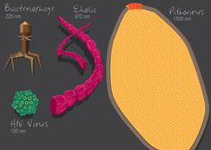 Their diversity makes viruses difficult to classify. A new study uses protein folds as evidence that viruses are living entities that belong on their own branch of the tree of life. Image: Julie McMahon