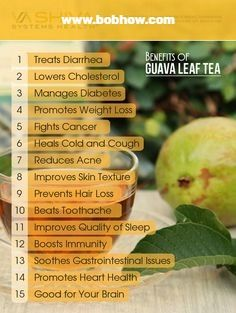 Guava Leaf Tea has been part of traditional medicine for centuries in Mexico and parts of South America. Guava Leaf Tea, Guava Leaves, Guava Tree, Guava Benefits, Tea Benefits, Fruit Benefits, Health Benefits, Going Vegetarian, Vegetarian Cooking