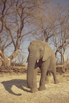 Andre Sonnekus - Johannesburg Wedding Photographer and Videographer: Willem & Jeanne @ Askari Game Lodge - Johannesburg Wedding Photographer Game Lodge, Pretoria, Game Reserve, Wildlife, Elephant, Spa, Africa, Wedding, Animals