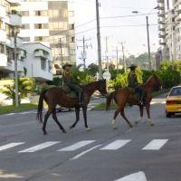 Foto de Pereira Horses, Animals, Pereira, Pictures, Colombia, Fotografia, Animales, Animaux, Animal