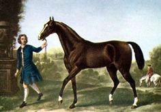All modern Thoroughbreds trace to three Arabian sires imported to England at the turn of the 18th century - the Darley Arabian (pictured), the Goldolphin Arabian and the Byerly Turk.