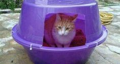 kedi evi yapımı ile ilgili görsel sonucu