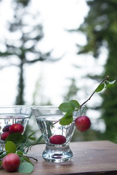 Foggy Plum Martini — The Forest Feast Wild Plum Tree, Recipe For Success, Yummy Drinks, Martini, Cherry, Cocktails, Fruit, Shake, Recipes