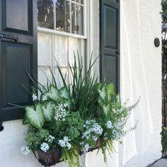 greens and white mix,| Charleston Jones Design Company