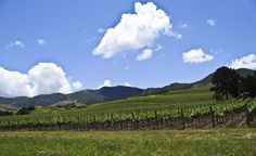 Sideways is a tour through one of the less-trafficked areas of California wine country, the Santa Ynez Valley. (Courtesy Jester7777/Wikimedia Commons)