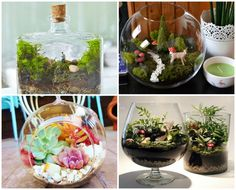 How to create a magical miniature garden that will add a touch of coziness to any home You will love how little care they require.