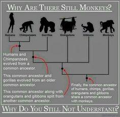 ¿Por qué aún hay monos?