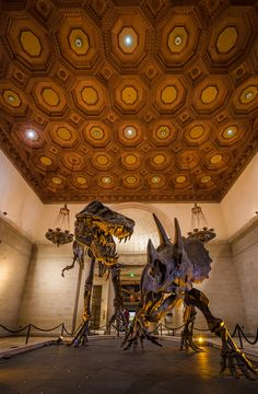 Natural History Museum of Los Angeles County Tips
