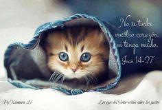 Los ojos del Señor están sobre los justos...Juan 14:27