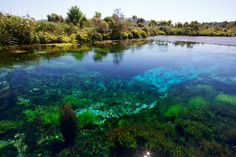Te Waikoropupū Springs, Golden Bay (South Island) #new-zealand