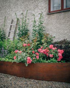 My Garden - Flowers & Gardens - WonderfulClara Green Garden, Garden Plants, My Secret Garden, Flower Beds, Garden Inspiration, Vegetable Garden, Container Gardening, Outdoor Gardens, Garden Design