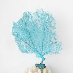 Sea Fan Coral, Aqua Turquoise Pastel, Beach Decor For Framing Bahama Natural Seafan by SandisShellscapes on Etsy