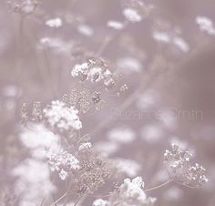 Gentleness - Suzanne Smith Photography