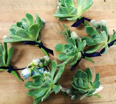 succulent boutonnieres with navy blue and/or white ribbons