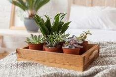 8 bedroom plants to improve your sleep