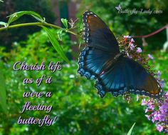 Cherish Life, Gossamer Wings, Butterfly, Animals, Frases, Animales, Animaux, Bowties, Butterflies
