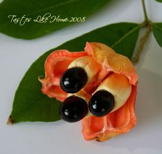 Image result for ackee seed pods